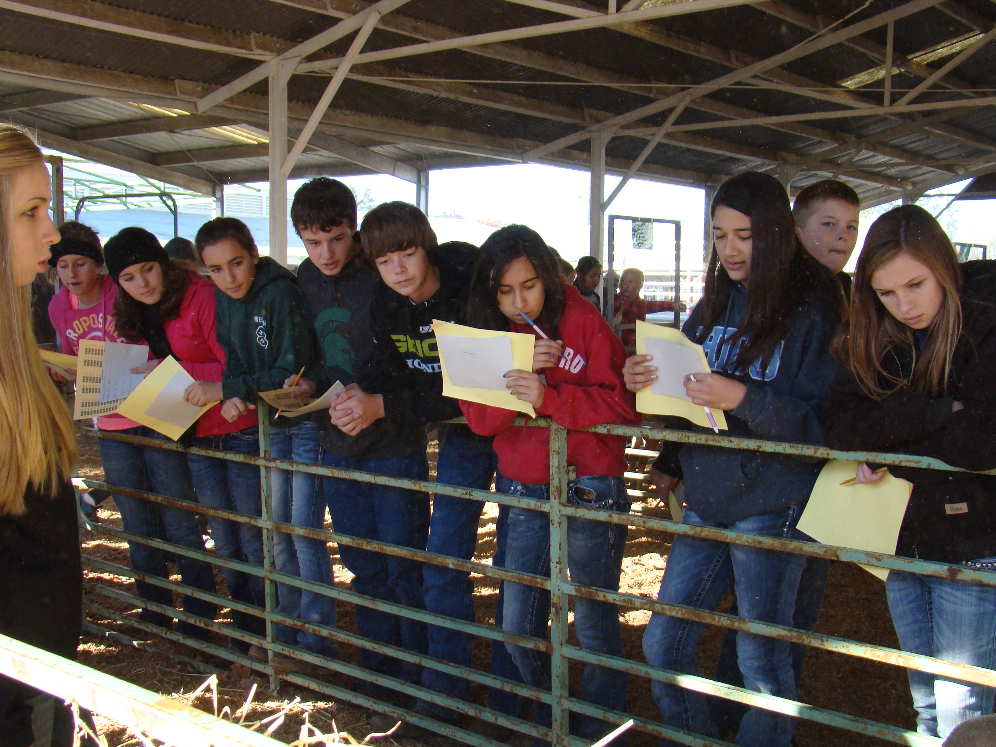 Glenn County Youth Judging at Livestock Field Day Event